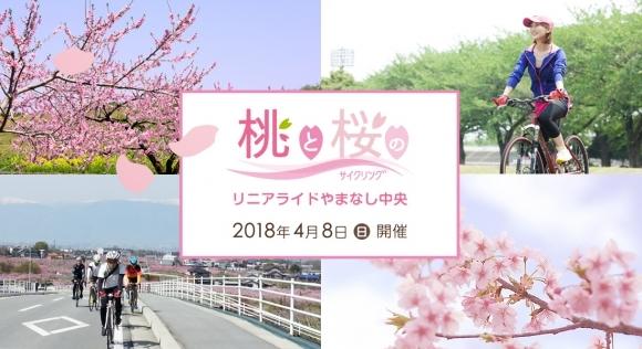 桃と桜のサイクリング